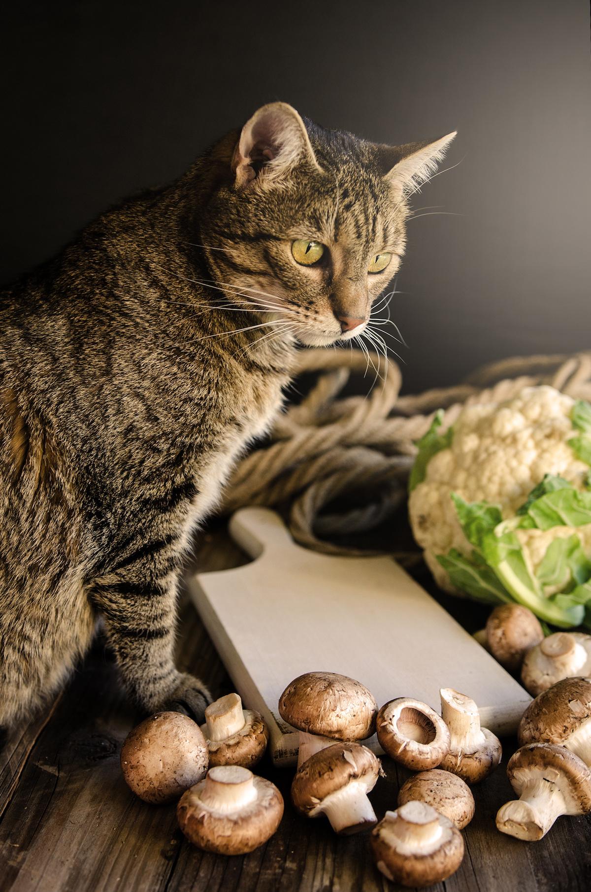 Pâtée pour chat boîte