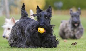 Friandise chien hypoallergénique