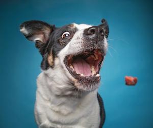 Friandises chiens pour le dressage