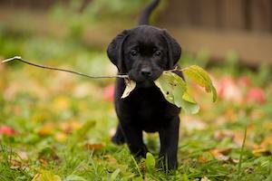 Friandises chiens sains et sans céréales